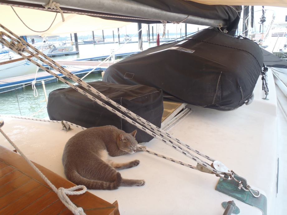 Sloop, our neighbours' cat. He so used to living on a boat, and would go 'borrowing' things from other boats.