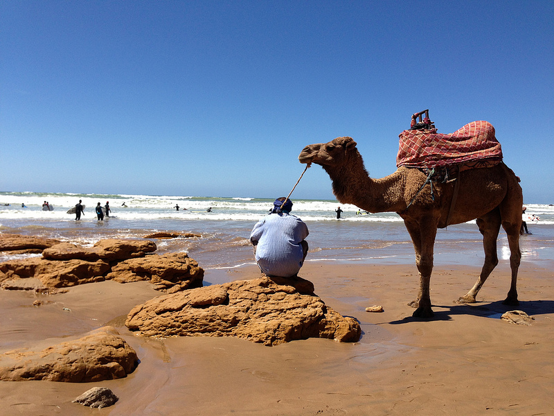 Camel on the beach at Taghazout - Photo: heatheronhertravels.com